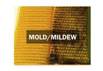 BioThane Belt Features Mold Mildew